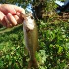 ミニルークの釣果