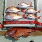 週末の南茶亭漁師の釣果
