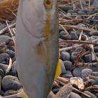 釣りキチKIDの釣果