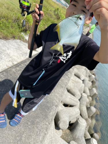 ツバメウオの釣果