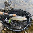AG.FISHNGの釣果