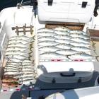 遊漁船SOUTH(サウス)の釣果