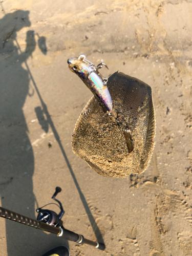 シタビラメの釣果