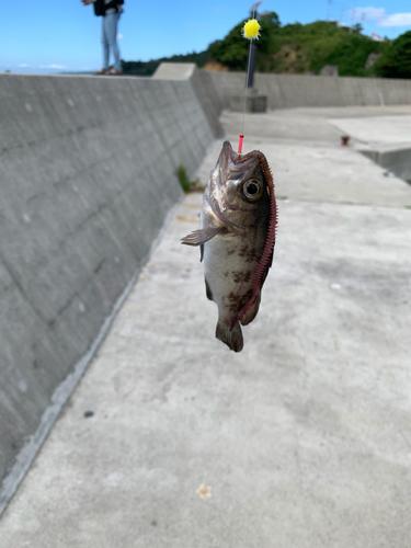 十八成浜漁港
