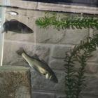 中学釣り人の釣果