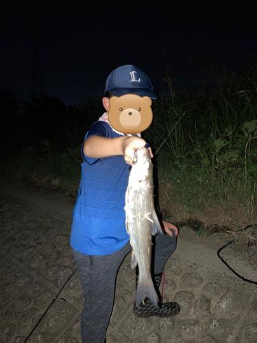 ニゴイの釣果