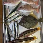 釣りきち三平です🎣の釣果