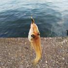 さらりーまん釣人の釣果