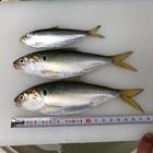 俺たちの釣りの釣果