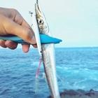 KOTA_LYの釣果