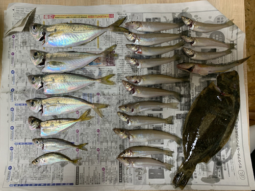 ヒラメの釣果