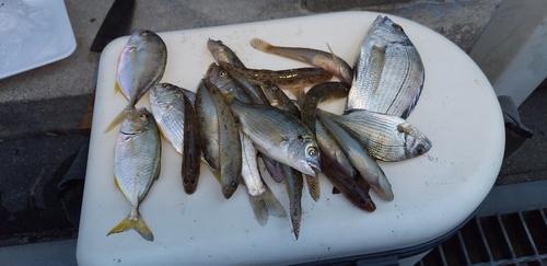 シマアジの釣果