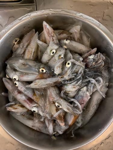 ヒイカの釣果