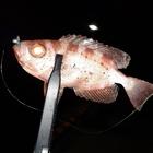 ajihiroの釣果