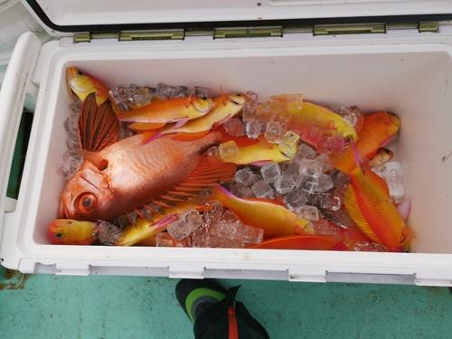 シキシマハナダイの釣果