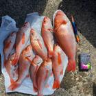 クソボウズの釣果