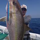 perfect_fisherman.tの釣果