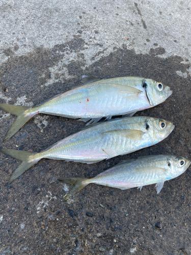 小湊漁港(千葉)