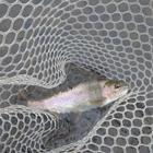178fishermanの釣果