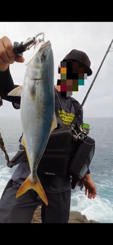 ツバスの釣果