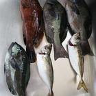 ヒロシ223の釣果