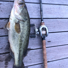一魚の釣果