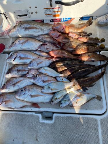 タイの釣果