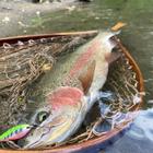 yy fishingの釣果