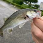 ハッピー釣りライフの釣果