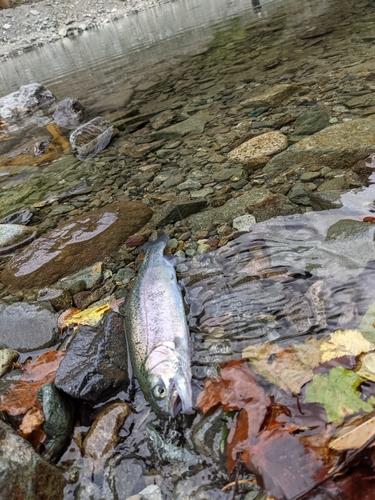 うらたんざわ渓流釣場