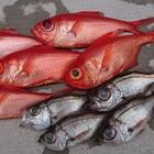 Tilefish Nobuの釣果