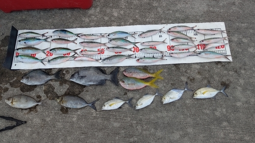 タカサゴの釣果