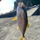釣り最高の釣果
