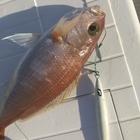 雄猫 tomcat Fishingの釣果