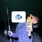 釣りキチandyの釣果