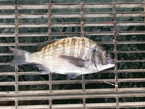 釣り公園シモツピアーランド
