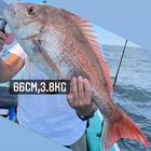 釣り鯛 ODNの釣果