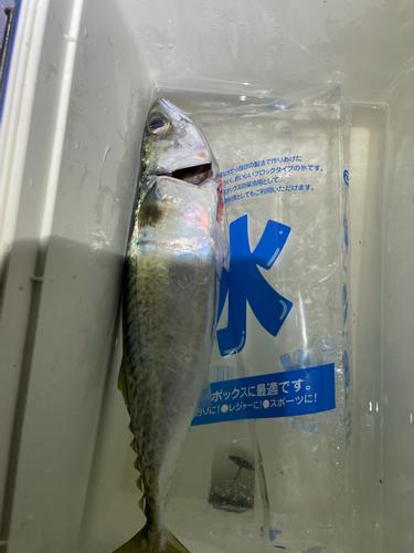 神戸空港親水護岸