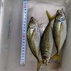 へっぽこ釣り師匠 2210673の釣果