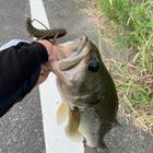 マサキヨの釣果