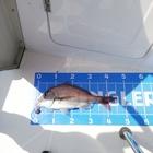 さかな釣っ太朗の釣果