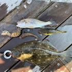 釣手内洋一の釣果
