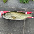 IRIE_fishing2000の釣果