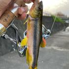 東の高校生釣り師の釣果