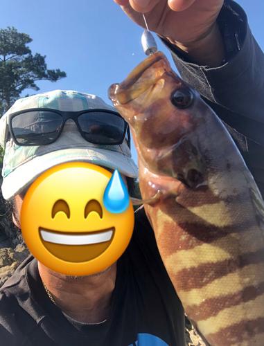 ヤミハタの釣果