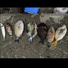 通りすがりのフカセ釣り師の釣果