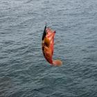 魚は買わないの釣果