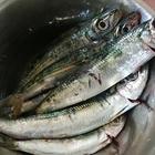 さとちん@釣った魚は食べる派の釣果