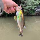 kobu0422の釣果