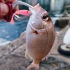 PON Tamotsuの釣果
